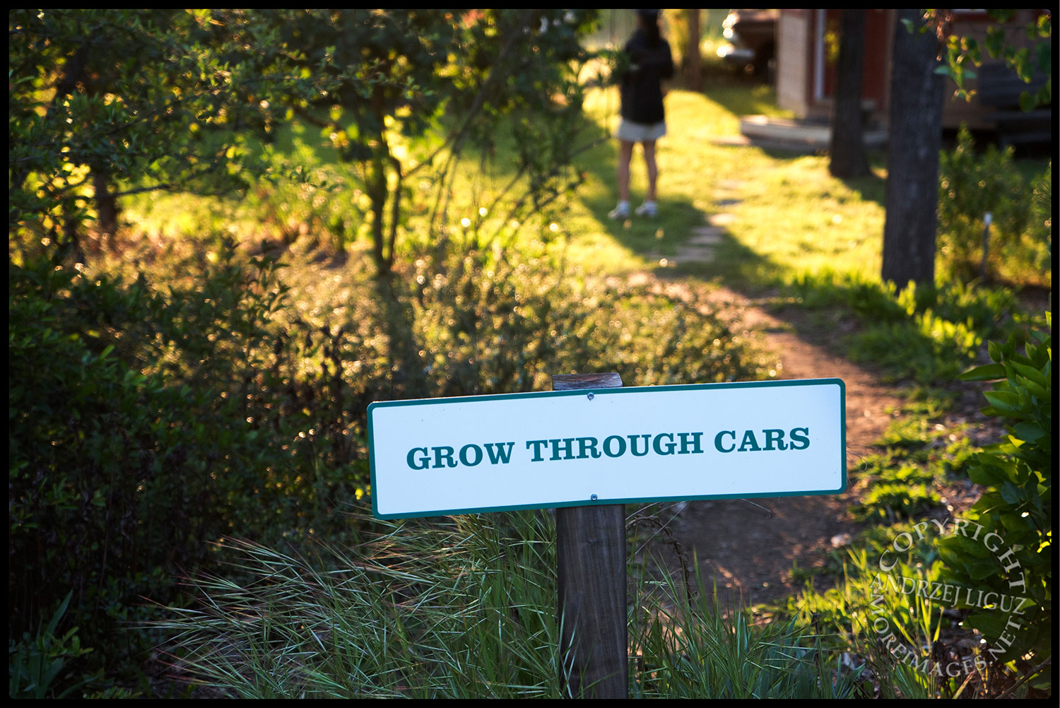Grow Through Cars, Solar Living Center, Hopland, CA 2015-04-11